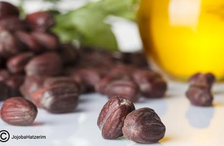 10 דברים שלא ידעתם על שמן חוחובה